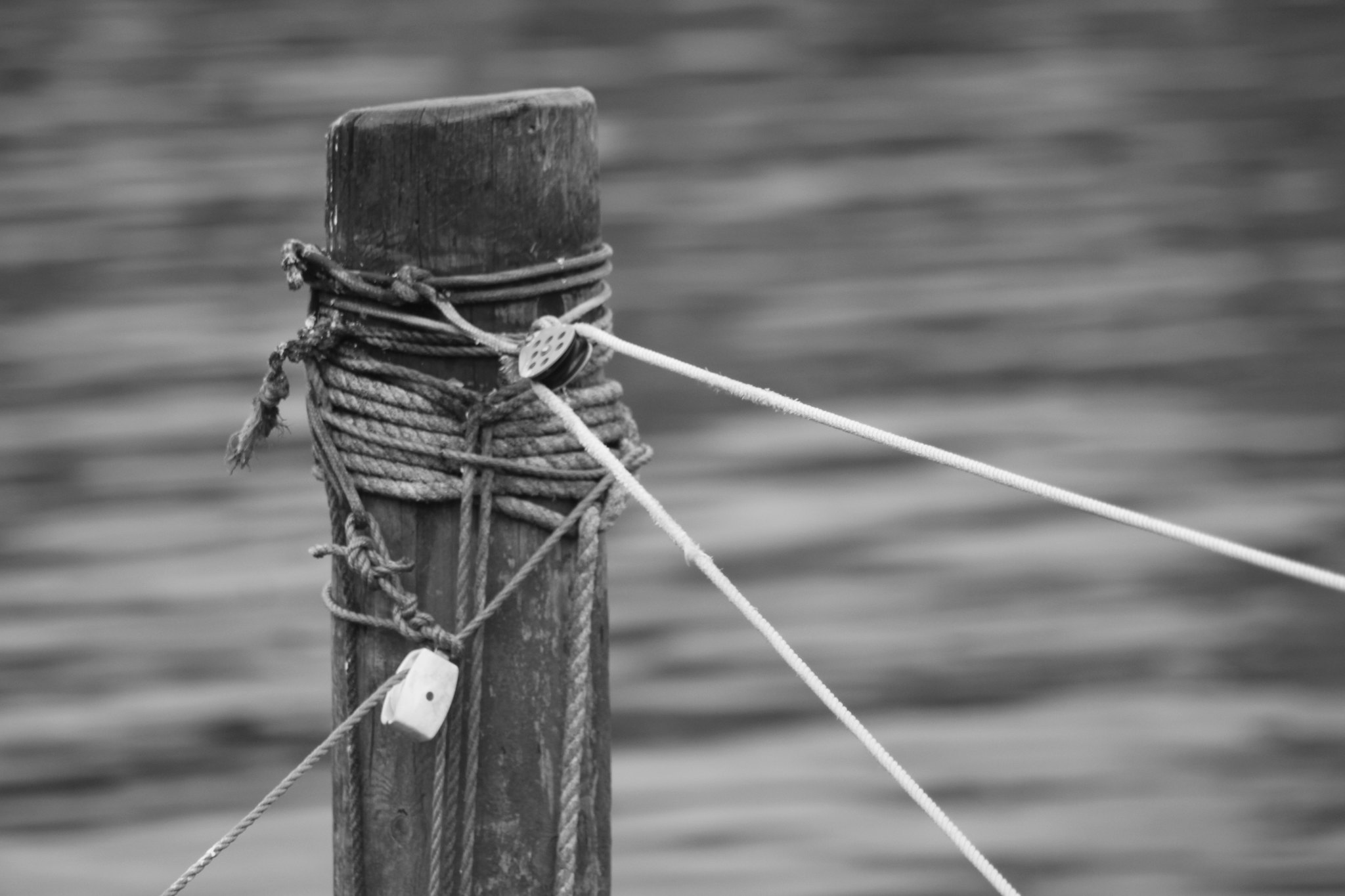 Knots on a jetty post
